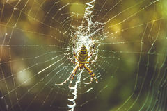 Spider on the Web Stock Image