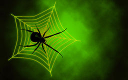 Spider web with big spider Royalty Free Stock Photography
