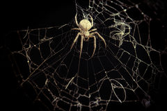 Spider on the spider-web Stock Image