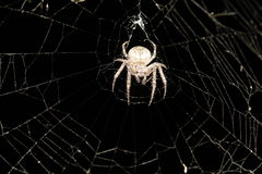 Spider on the spider-web Stock Images