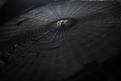 Spider web Royalty Free Stock Photography