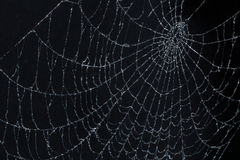 Spider web on black Royalty Free Stock Photo