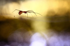 Spider in the web blur rays of sun Royalty Free Stock Photos