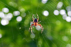 Spider and web Stock Photography
