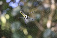 Spider web of braiding, closeup. Background blur Royalty Free Stock Photo