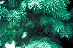 Spider web on the branch Stock Photo