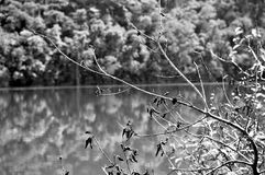 Spider web on a branch of a tree by the lake. Black and White picture Stock Images