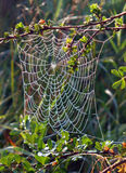 Spider web on a bush. Photo spider web in dew and sun rays between the branches of shrubs Stock Images