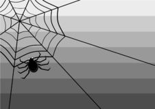 Spider on the web bw royalty free illustration