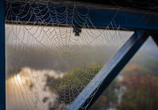 Spider web captures moisture from the air as droplets of water form along its silken strands. Wet spider web and strands of silk, tapestry supporting droplets Royalty Free Stock Photography
