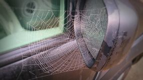 Spider web on a car. Stock Image