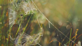 Spider in a web stock video