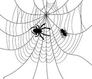 vector spider, web and a caught fly Royalty Free Stock Image