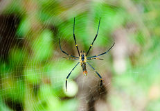 Spider and  web. Spider in the center of a web on a nature background Stock Photo