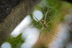 Spider on the web chilling nature green Marco royalty free stock photo