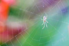 Spider and web Stock Photos