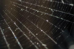 A spider web close. A little spider and its web Royalty Free Stock Images