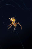 Spider on a web. Close up royalty free stock photography