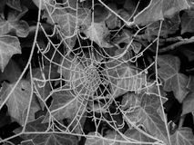 A spider web. A close up of a spider web, darkened Stock Image