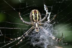 Spider on web. Close up image of spider on web Royalty Free Stock Photo
