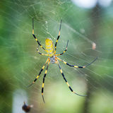 Spider on a Web. Close up of a spider lying in wait for insects to wander into its web royalty free stock image