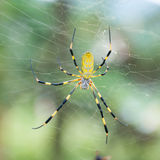 Spider on a Web. Close up of a spider lying in wait for insects to wander into its web royalty free stock images