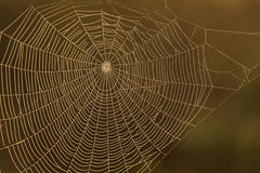 The Spider Web close up after rain Royalty Free Stock Photography