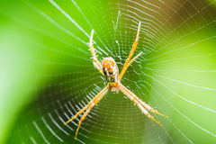 Spider on the web Stock Photos