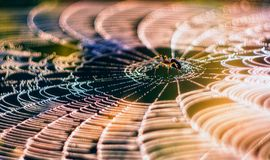 Spider on the web. Stock Image