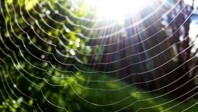 Spider Web in Closeup Photo Stock Photography