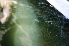 A spider web closeup of spider weaving royalty free stock photo