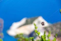 Spider on web and coast. Spider on web and summer Porto Katsiki coast on Ionian Sea (Lefkada, Greece) behind Royalty Free Stock Photography