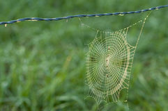Spider web coated with fog. Royalty Free Stock Image