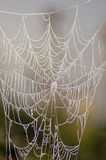 Spider web coated with fog. Stock Image