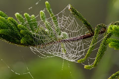 The spider web (cobweb) autumn background and water drops on pin Stock Photos
