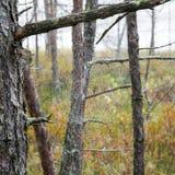 The spider web (cobweb) closeup background. Royalty Free Stock Photo