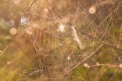 The spider web (cobweb) Royalty Free Stock Photo