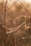 The spider web (cobweb) Royalty Free Stock Image