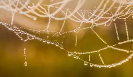 The spider web (cobweb) Royalty Free Stock Photography