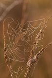The spider web (cobweb) Stock Photo