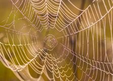 The spider web (cobweb) Stock Images