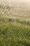 Spider web (Cobweb) with dew drops Royalty Free Stock Photos