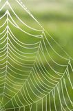 Spider web (Cobweb) with dew drops Royalty Free Stock Images