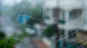 Spider web or Cobweb with early morning dew drops-Indore,India. Spider web or Cobweb with early morning dew drops against blurred bokeh background in rainy day Royalty Free Stock Photos