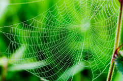 Spider web or cobweb with water drops after rain Stock Images