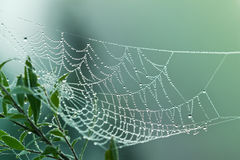 Spider web or cobweb with water drops Royalty Free Stock Image