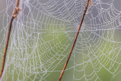 Spider web or cobweb. With water drops after rain against green background Stock Image