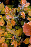 Spider web on a cold winder morning Stock Photo