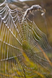 spider web with colorful background, spider web with water drops Stock Image
