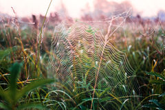 Spider web on cool morning meadow Royalty Free Stock Images